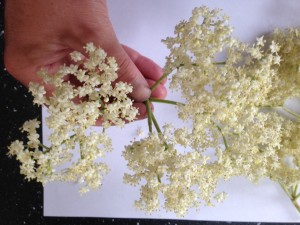 An elderflower head or two
